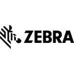 Zebra At Colamco